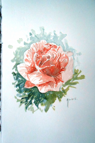 aquarelle rose.JPG
